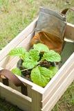 Gartenarbeitwerkzeuge in der hölzernen Kiste Stockbild