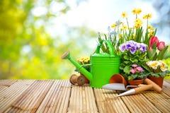 Gartenarbeitwerkzeuge und -blumen auf der Terrasse Lizenzfreies Stockfoto