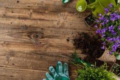 Gartenarbeitwerkzeuge und -blumen auf hölzernem Hintergrund Stockfotografie