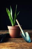 Gartenarbeitwerkzeuge und eingemachte Blume Stockbilder