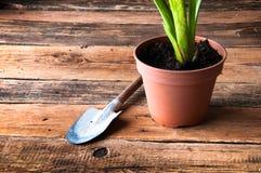 Gartenarbeitwerkzeuge und eingemachte Blume Lizenzfreie Stockbilder
