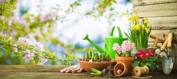 Gartenarbeitwerkzeuge und Frühlingsblumen auf der Terrasse stockfotografie