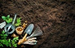 Gartenarbeitwerkzeuge und -sämlinge auf Boden lizenzfreies stockbild