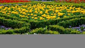 Gartenauslegung Lizenzfreie Stockbilder