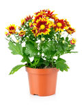Gartenausrüstung mit Grünpflanzen Lizenzfreies Stockfoto