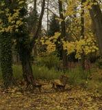Gartenbänke an einem Herbsttag stockfoto