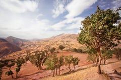Gartenbäume auf Naturlandschaft mit Wolken Lizenzfreie Stockbilder