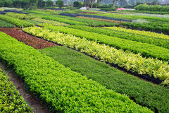 Gartenbaubauernhof Stockbilder