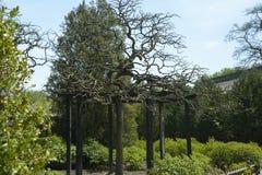 Gartenbaumanlage Lizenzfreie Stockfotografie