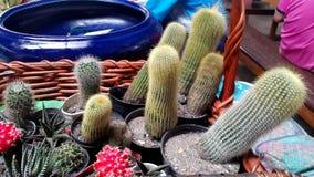 Gartenbehälter Stockfotografie
