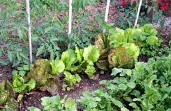 Gartenbett Stockfotos
