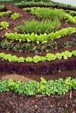 Gartenbett Stockfotografie