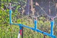 Gartenbewässerung Stockfotografie