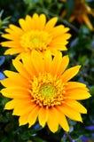 Gartenblume   Lizenzfreies Stockfoto