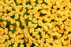 Gartenblume Lizenzfreies Stockbild