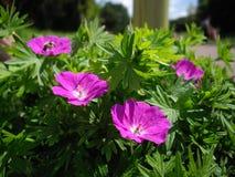 Gartenblumen Stockbild