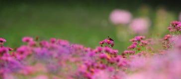 Gartenblumen stockfoto