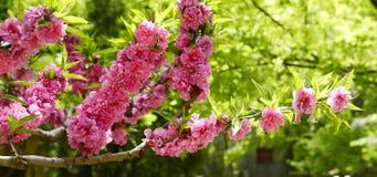 Gartenblumen stockfotos
