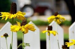 Gartenblumen auf einem Bauernhof Stockfotografie
