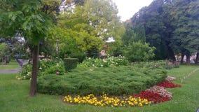 Gartenblumen auf grünem Gras Stockbild