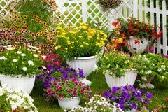 Gartenblumen von verschiedenen Farben in den Töpfen Lizenzfreie Stockfotos
