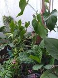 Gartenblumen vor dem Haus stockfoto