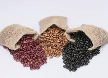 Gartenbohnen, Pintobohnen und schwarze Bohnen Stockbild