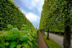 Gartenbäume und -gehweg Lizenzfreie Stockfotografie