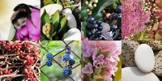 Gartencollage Stockfotos
