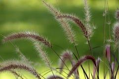 Gartendekoration Lizenzfreies Stockbild