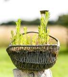 Gartendekoration des alten Metalldrahtkorbes Stockfoto