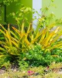 Gartendesign mit Blumen Lizenzfreie Stockfotografie