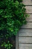 Gartendetail in der Antenne Lizenzfreie Stockfotos