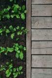 Gartendetail in der Antenne Stockfoto