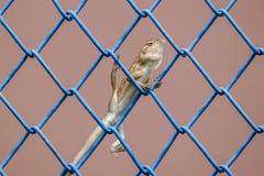 Garteneidechse, die auf Metallzaun klettert Stockfoto