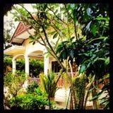 Gartenflügel Stockbilder