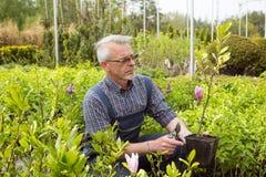 GartenGeschäftsleiter, der eine Blume in einem Topf hält stockfoto