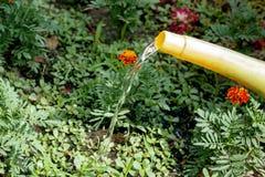 Gartengießkannewasser die Blumen auf dem Blumenbeet Arbeiten im Garten Lizenzfreie Stockfotografie