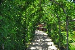 Gartengrün Stockbild
