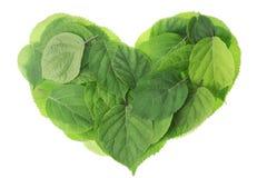 Gartengrün lässt Inneres Lizenzfreies Stockfoto
