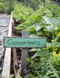 Gartengurken Stockbild