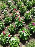 Gartenhervorrufungen lizenzfreie stockbilder