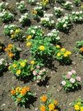 Gartenhervorrufungen lizenzfreie stockfotografie