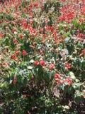 Gartenhervorrufungen stockfotos