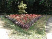 Gartenhervorrufungen Stockfotografie