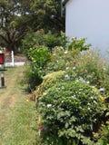 Gartenhervorrufungen Stockbilder