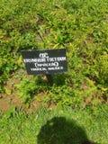 Gartenhervorrufungen Lizenzfreie Stockfotos