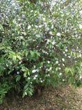 Gartenhervorrufungen stockfoto