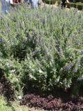Gartenhervorrufungen lizenzfreies stockfoto
