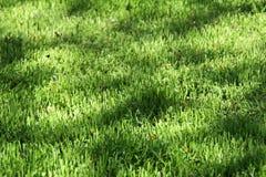 Gartenhintergrund stockbild
